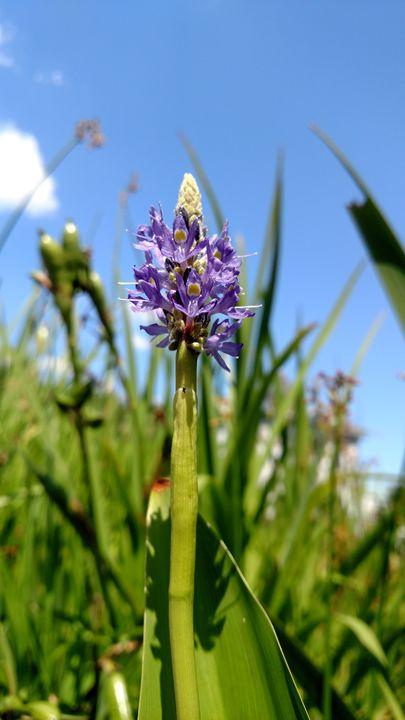 Summer Flower - Ani Miracle Arts
