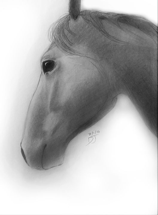 Mare Profile - Drawing Central