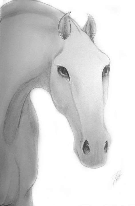 Intense Stallion - Drawing Central