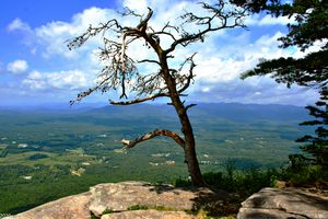 A Lone Tree Atop Yonah Mountain Geor