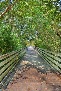 A Lowcountry Tunnel Of Trees