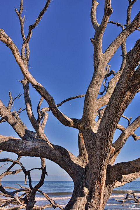 Driftwood And Georgia Blue Skies Jek - Lisa Wooten Photography