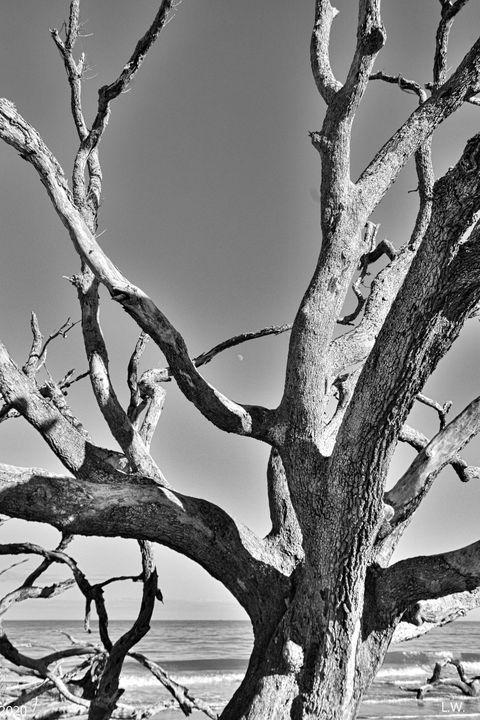 Driftwood And Georgia Blue Skies - Lisa Wooten Photography