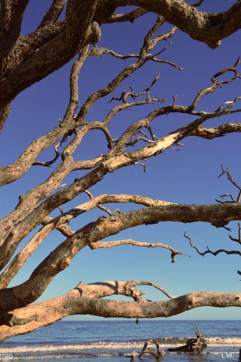 Jekyll Island Driftwood - Lisa Wooten Photography