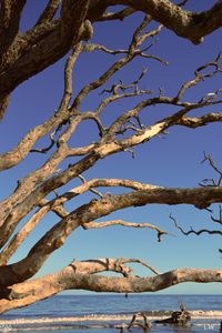 Jekyll Island Driftwood