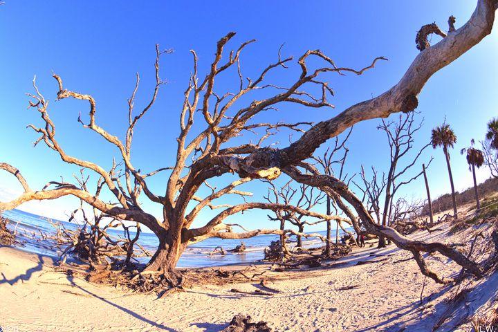 Jekyll Island Driftwood And Sand - Lisa Wooten Photography