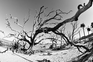 Jekyll Island Driftwood And Sand Bla