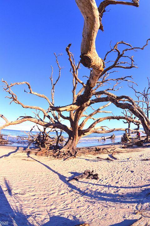 Jekyll Island Driftwood And Sand Ver - Lisa Wooten Photography