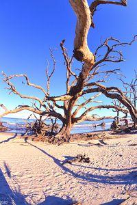 Jekyll Island Driftwood And Sand Ver