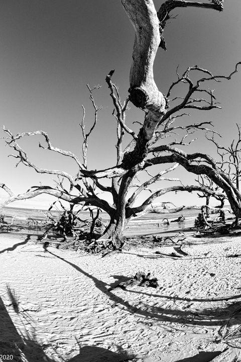 Jekyll Island Driftwood And Sand Bla - Lisa Wooten Photography
