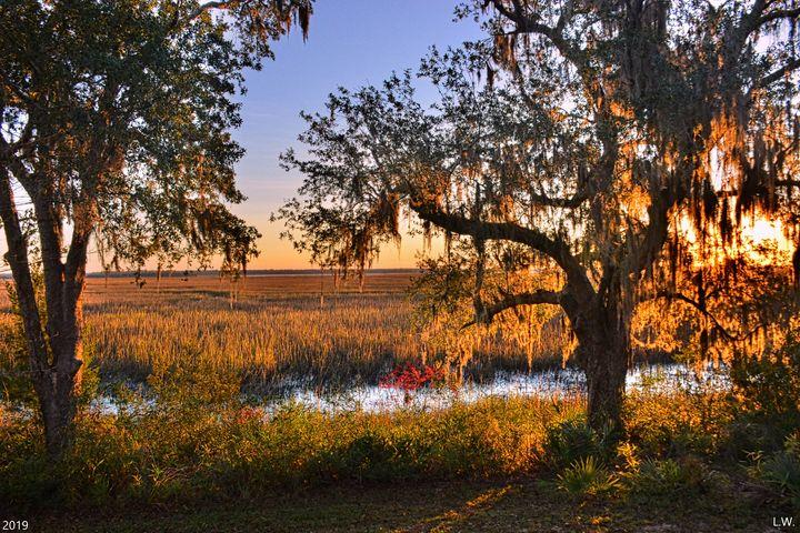 Marsh Sunrise - Lisa Wooten Photography