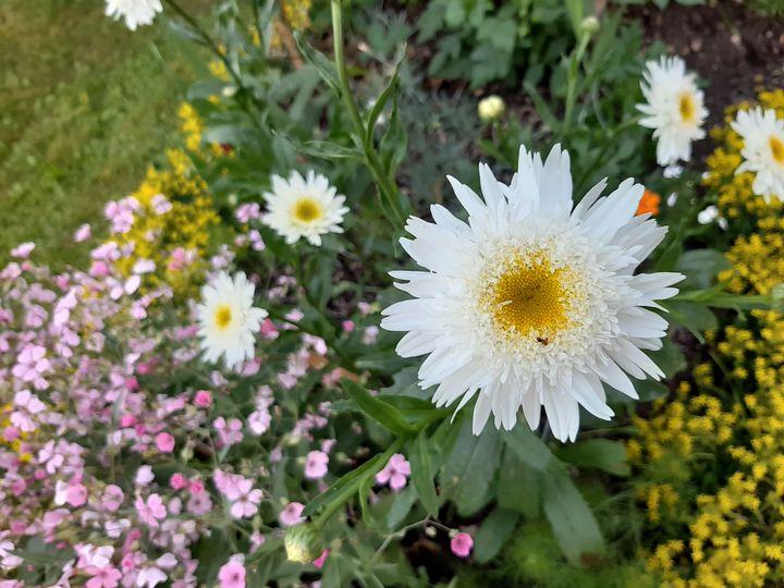 Flowers - Vibration