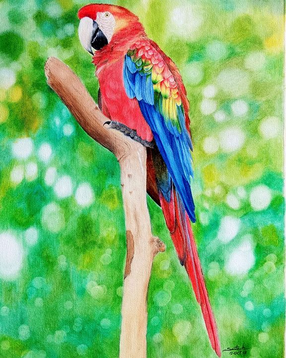 Macaw - Santosh Mane Paintings