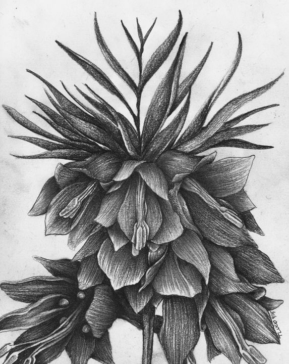 Fritillaria - Botanicals