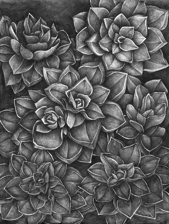 Echeveria Rosea-Crassulaceae - Botanicals