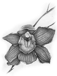 Orchid - Botanicals