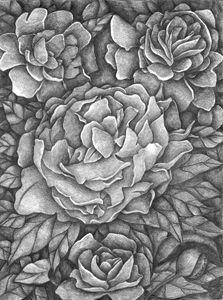 Peony Flower - Botanicals