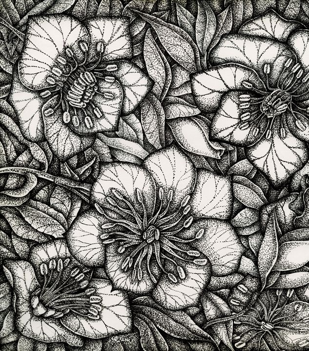Hellebores - Botanicals