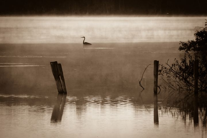 Great heron in morning mist - OpposableThumbnails