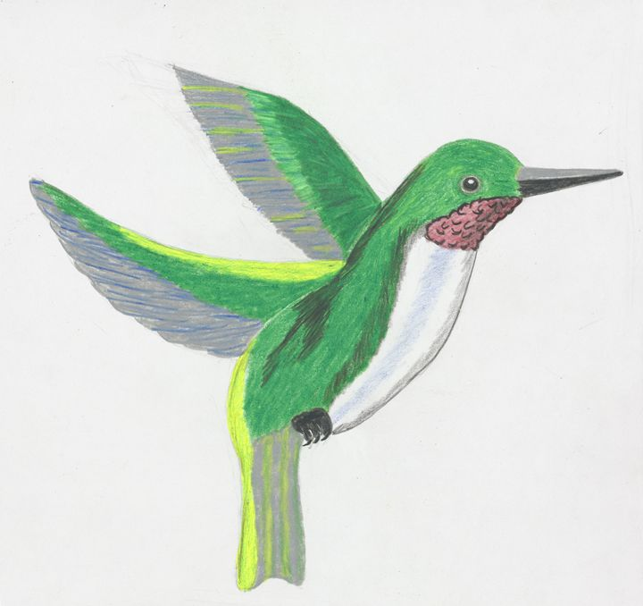 hummingbird - samsartplace