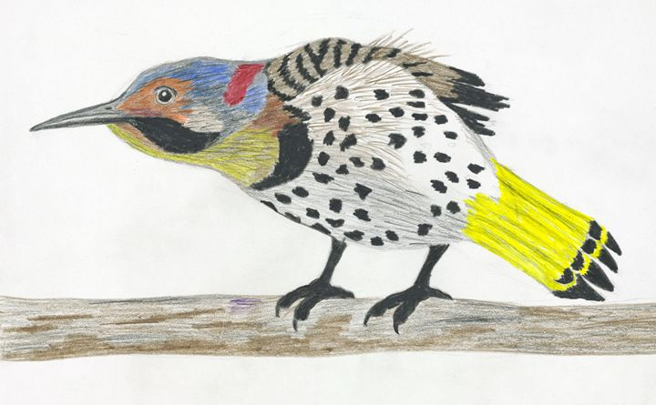 Bird - samsartplace