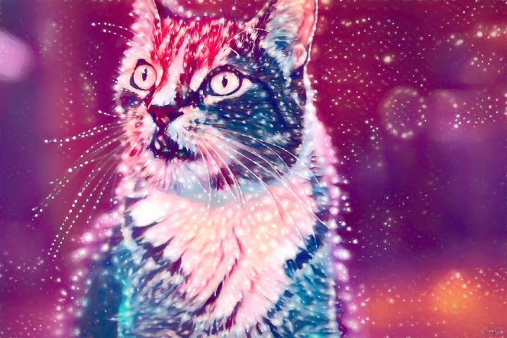 Cat Space - Covester