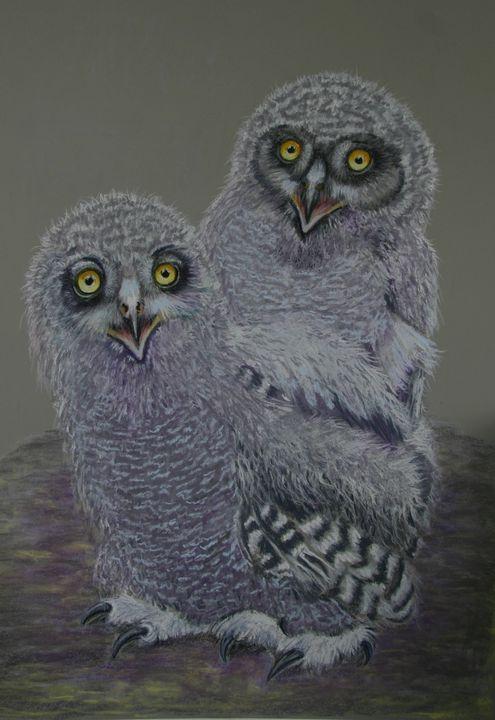 owls - TinaH