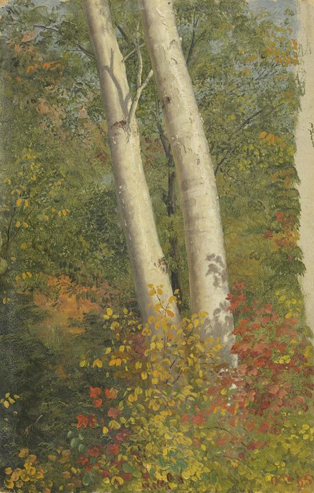 Frederic Edwin Church~Birch Trees in - Old master