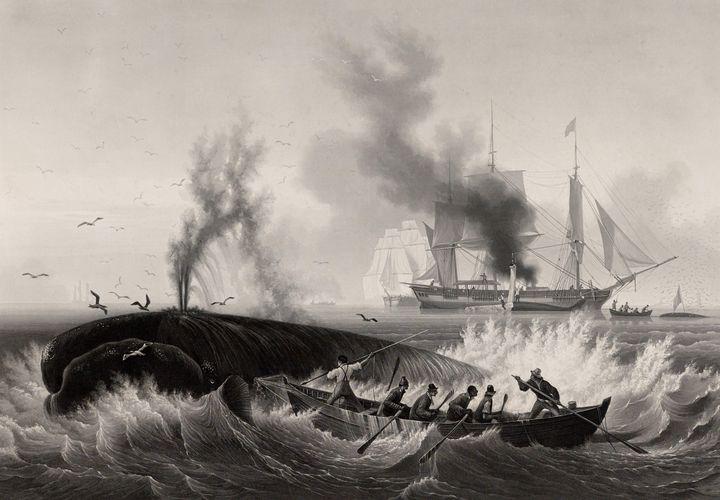 Frédéric Martens~Pêche de la Baleine - Old master