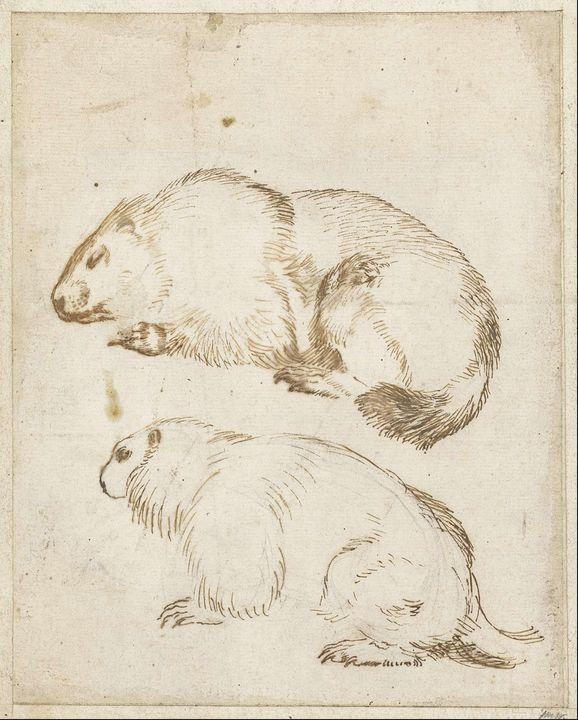 Guercino~Twee marmotten - Old master