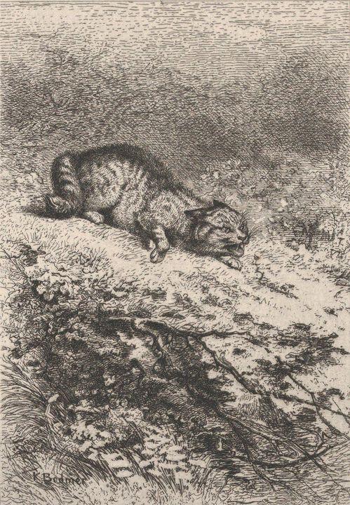 Karl Bodmer~Wild Cat - Old master