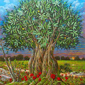 centenarian olive tree - Margaret