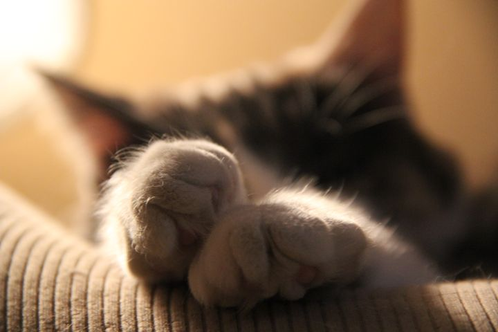 Kitty Paws - Snapshots of a Life