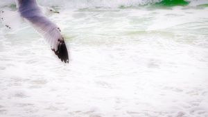 Seagull in Miami Beach