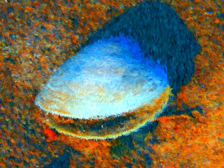 Soothing Clam - Museum of A Lot of Art MOLOA