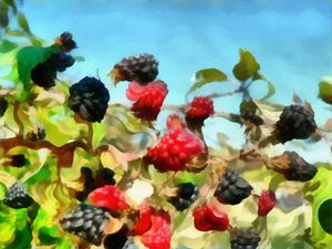 Fluffy Berries - Museum of A Lot of Art MOLOA