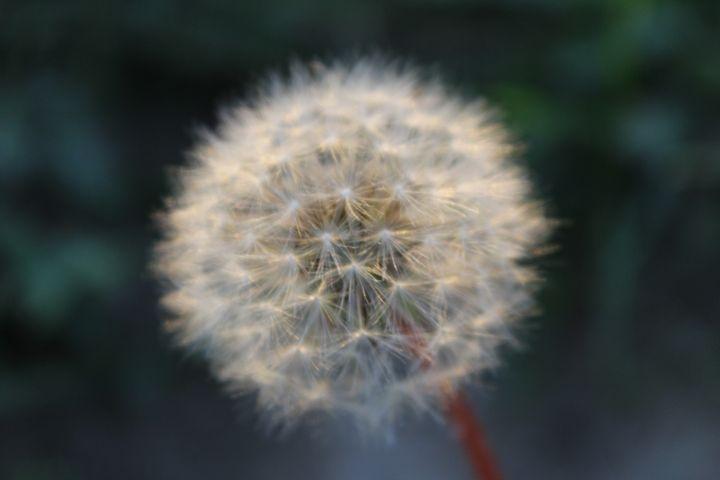 Make a Wish - Little Bits of Heaven