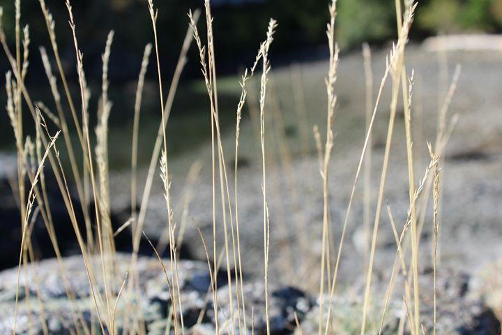Seashore Grass - Little Bits of Heaven