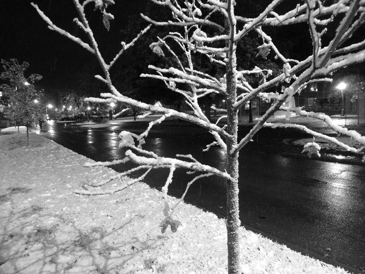 Winter Tree - Michelle Benedett