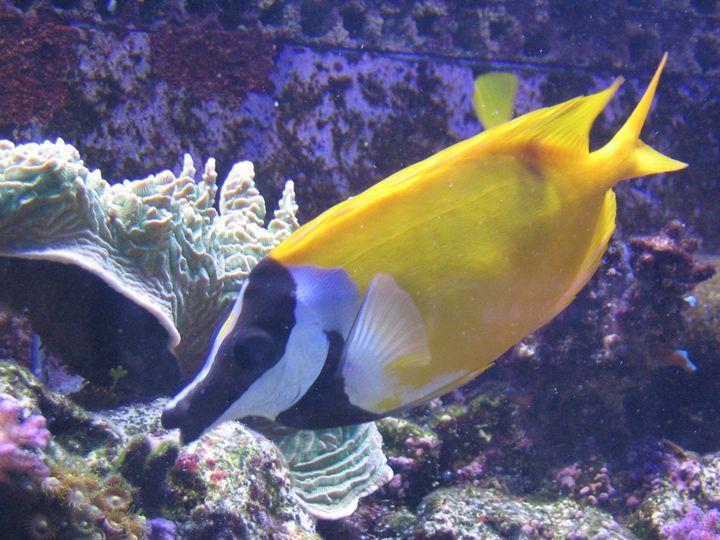 Fish - Michelle Benedett
