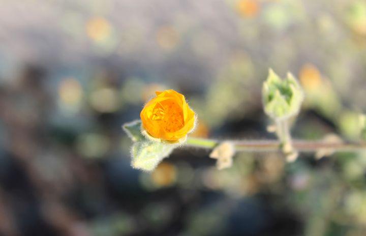 Sweet Clementine - Miranda Mead art