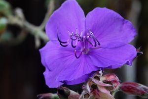 Ultraviolet Flora