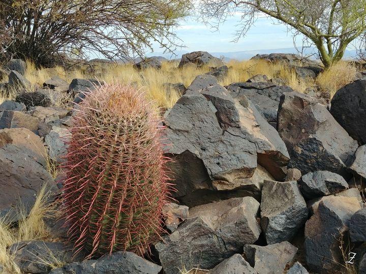 Cactus - Unknown Native