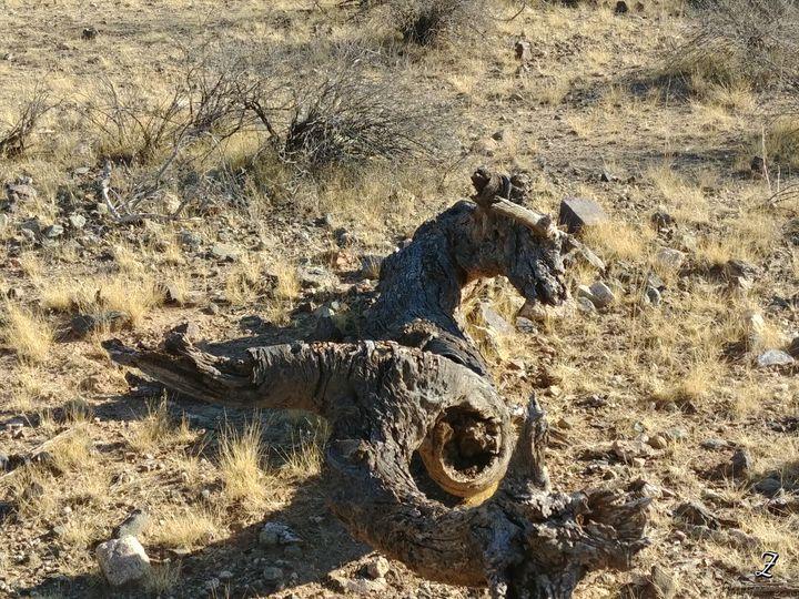 Dead tree - Unknown Native
