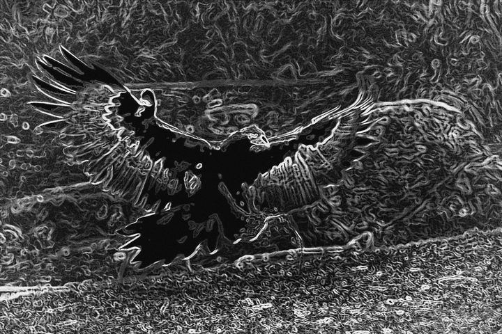 WEDGED TAILED EAGLE - Tezza's fine art photography