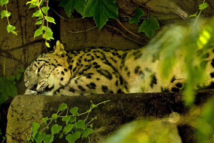 CAT NAP - Tezza'sfineartphotography