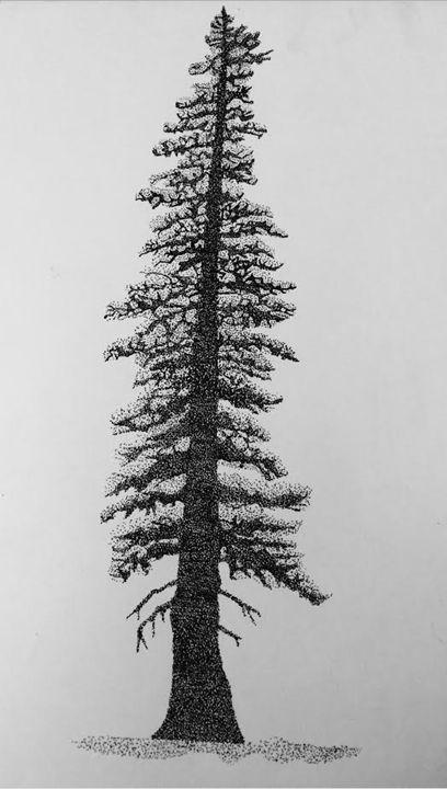 Stippling Sitka Spruce - Angus Hills Art