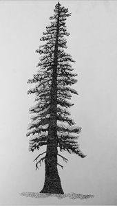 Stippling Sitka Spruce