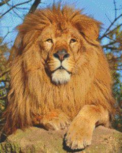 """King of the Serengeti"" MicroMosaic"