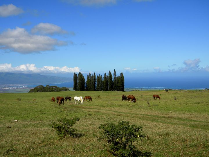 Peaceful Moment Haleakala Ranch - LuckyPhotos
